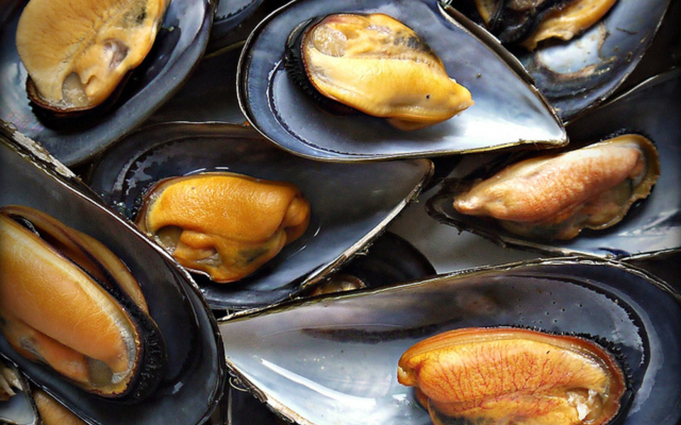 Fresh mussels steamed